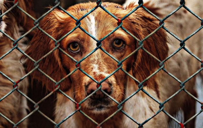 znęcanie się nad zwierzętami kodeks karny