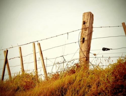 Jak odzyskać ziemie zabrane przez państwo bez ustawy reprywatyzacyjnej?